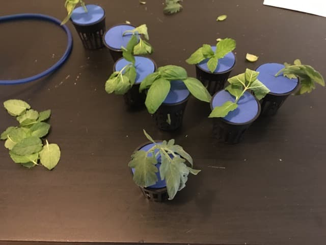 Overview of Cut Plants